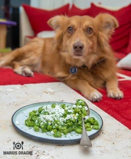 Salata cu fasole fava si branza feta